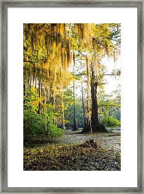 Golden Spanish Moss Framed Print by Ellie Teramoto