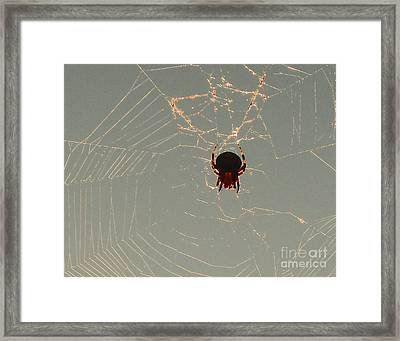 Framed Print featuring the photograph Golden Spider by Cheryl Del Toro