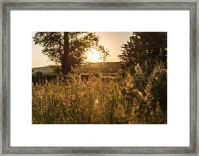 Golden Starts Framed Print