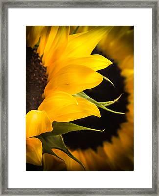 Golden Summers Framed Print