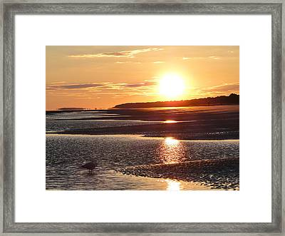 Golden Sunset Framed Print by Cindy Croal