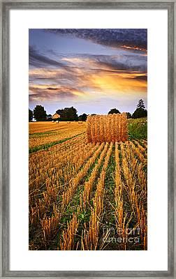 Golden Sunset Over Farm Field In Ontario Framed Print
