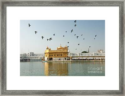 Golden Temple In Amritsar Framed Print