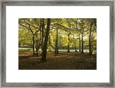 Framed Print featuring the photograph Golden Texture by Trevor Chriss