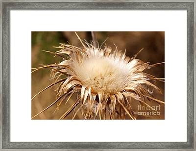 Golden Thistle Framed Print by Kerri Mortenson