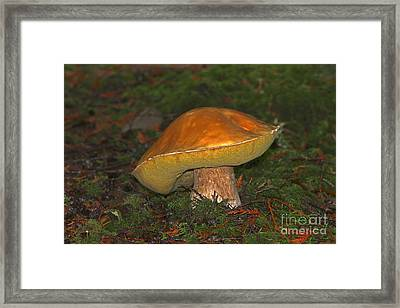 Golden Toadstool Framed Print by Sharon Talson