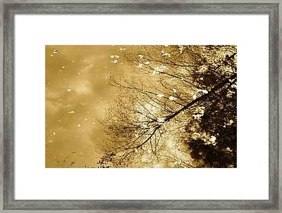 Golden Tones Framed Print by Corinne Rhode