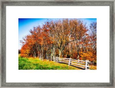 Golden Treasure In The Blue Ridge Framed Print by Dan Carmichael