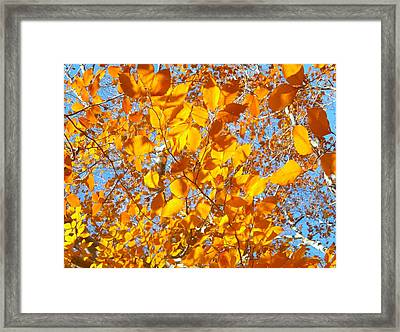 Golden Tree B Framed Print by Sylvia Herrington