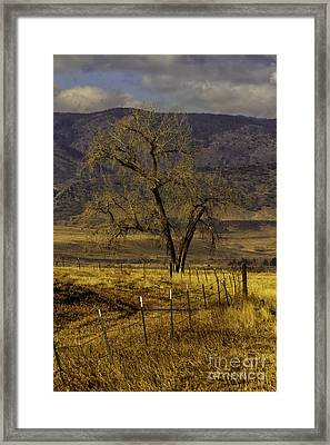 Golden Tree Framed Print