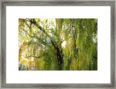 Golden Treelight Framed Print by Mike Lee