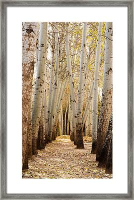 Framed Print featuring the photograph Golden Trees Dunhuang China by Sally Ross