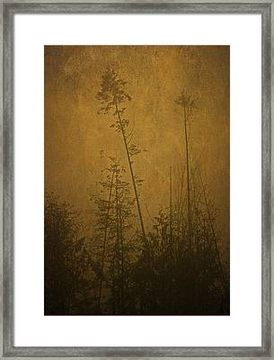 Framed Print featuring the photograph Golden Trees In Winter by Peggy Collins