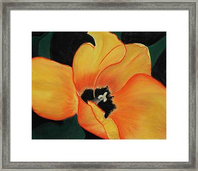Golden Tulip Framed Print