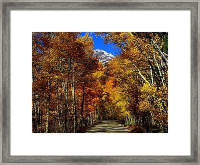 Golden Tunnel Framed Print