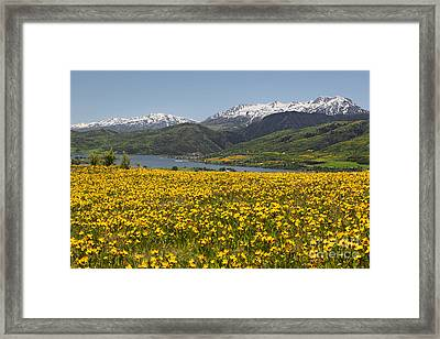 Golden Valley Framed Print
