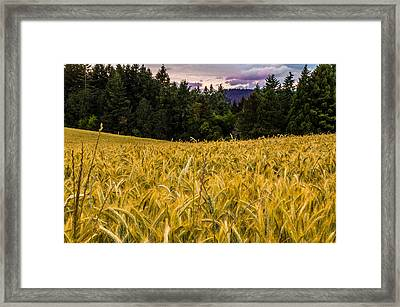 Golden Valley Framed Print by Denise Darby