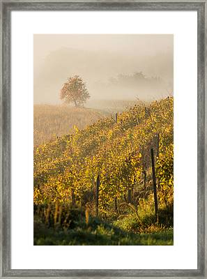 Golden Vineyard And Tree Framed Print by Davorin Mance