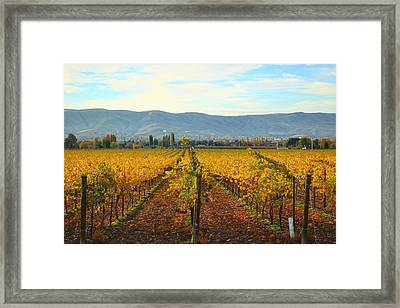 Golden Vineyards Framed Print by Lynn Hopwood
