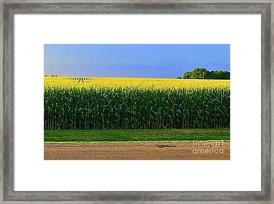 Golden Waves Of Grain Framed Print