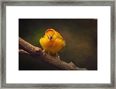 Golden Weaver Bird Framed Print by Maria Angelica Maira