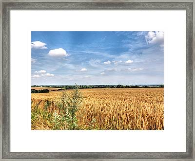 Golden Wheat Fields Framed Print by Gill Billington