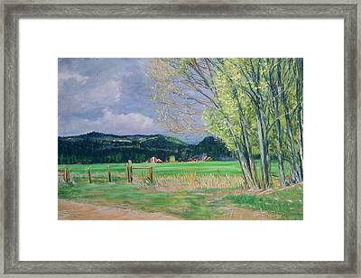 Golden Willows - Spring Framed Print
