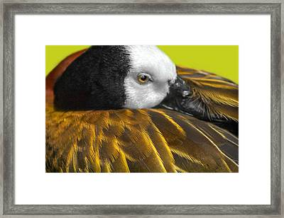 Golden Wings Framed Print