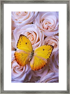 Golden Wings On Roses Framed Print