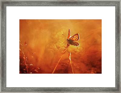Golden Wings Framed Print
