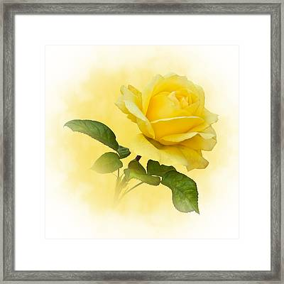 Golden Yellow Rose Framed Print by Jane McIlroy