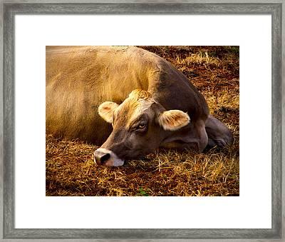 Goldeneye Framed Print by Robert Geary