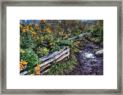Goldenrod Blooms On The Blue Ridge Parkway  Framed Print