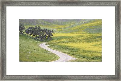 Goldenrod Oak Santa Ynez California Framed Print
