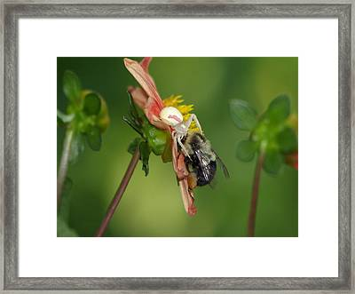 Framed Print featuring the photograph Goldenrod Spider by James Peterson