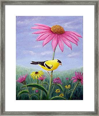 Goldfinch And Coneflowers Framed Print