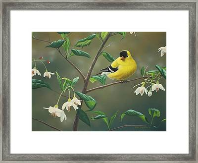 Goldfinch And Snowbells Framed Print by Peter Mathios