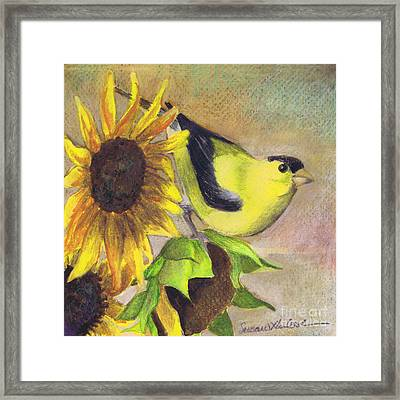 Goldfinch And Sunflowers Framed Print by Susan Herbst