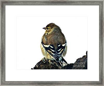 Goldfinch At Sunrise Framed Print