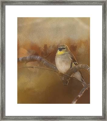 Resting Goldfinch Framed Print