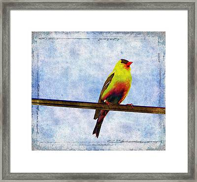 Goldfinch Framed Print by Cassie Peters