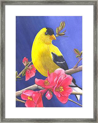 Goldfinch Framed Print by Catherine G McElroy