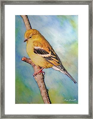 Goldfinch Female Framed Print by Ken Everett