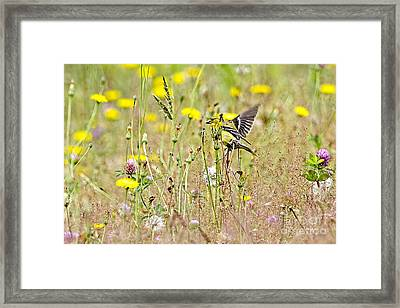 Goldfinch In A Field Of Wildflowers Framed Print by Sharon Talson