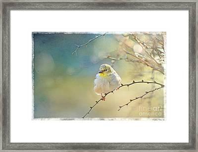 Goldfinch In Golden Light Framed Print