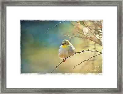 Goldfinch In Morning Light - Digital Paint I  Framed Print
