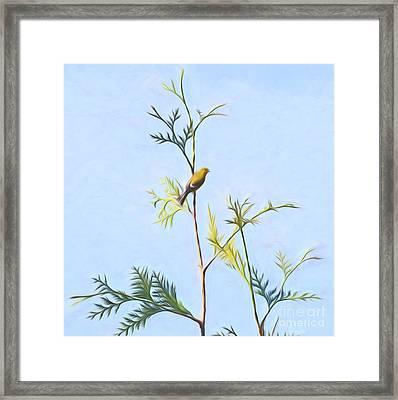 Goldfinch Minimalism Framed Print