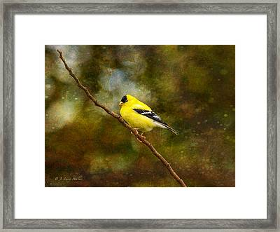 Goldfinch On A Limb Framed Print by J Larry Walker