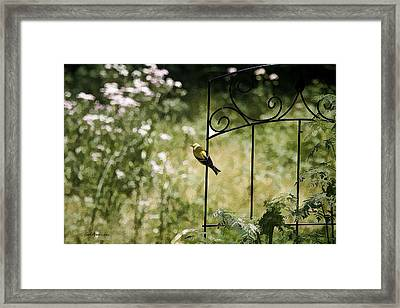 Goldfinch On The Lookout -19 Framed Print by EricaMaxine  Price