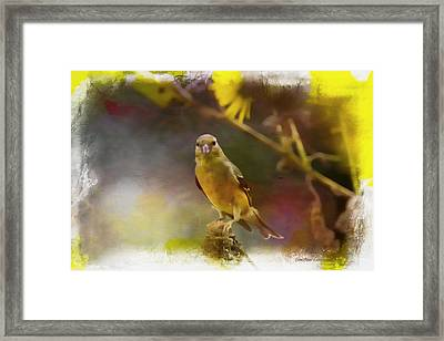 Goldfinch Php Framed Print by EricaMaxine  Price